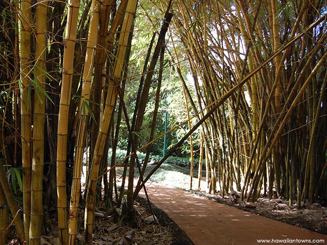 竹林の中を歩く植物園のコース