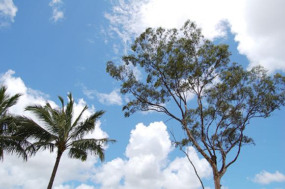 クカニロコで撮った空と木